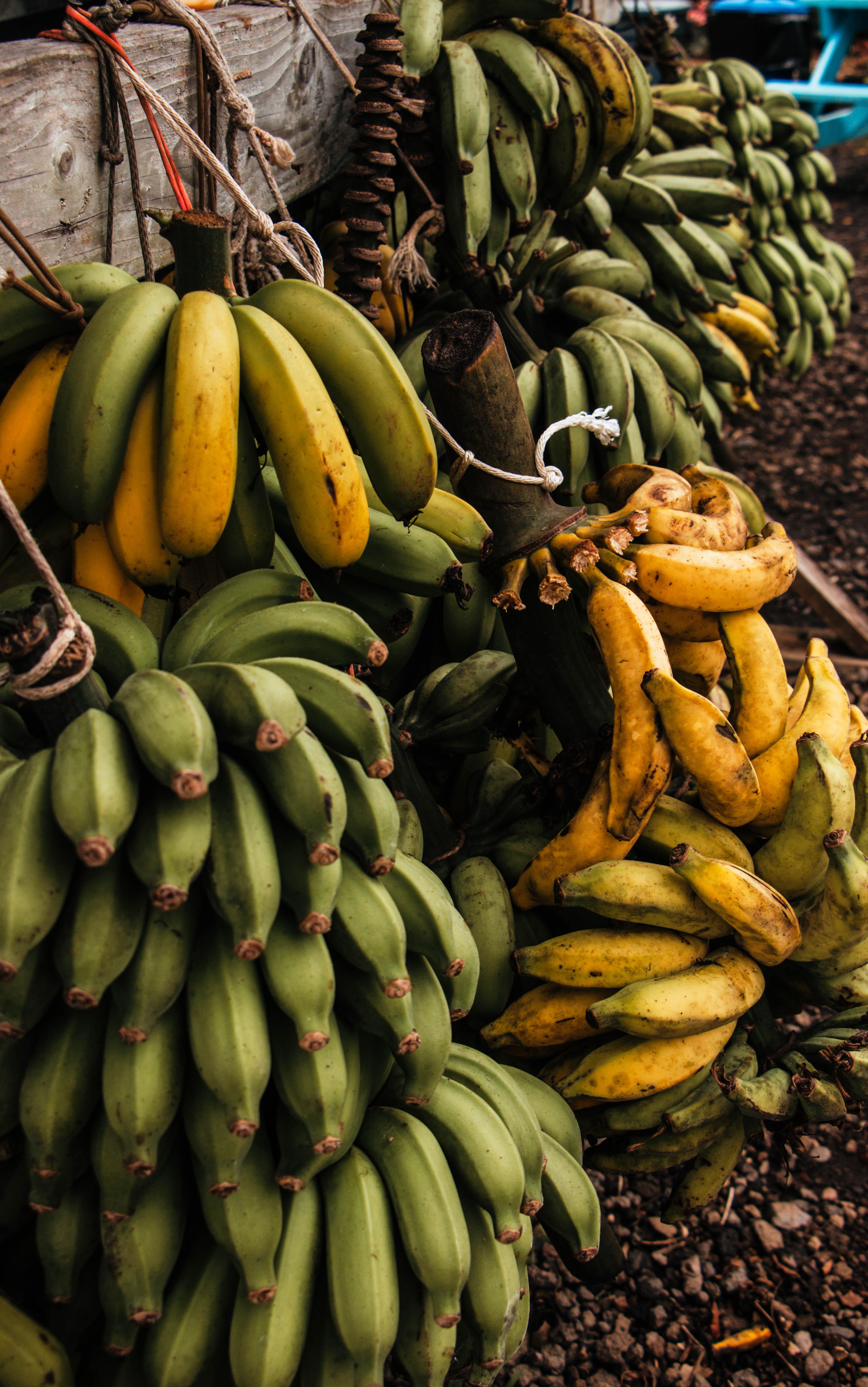 Banany właściwości (założę się że wszystkich nie znałeś)