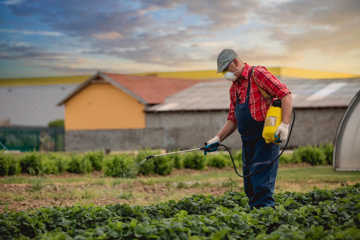 Najpopularniejsze pestycydy, czy na pewno należy się ich bać?